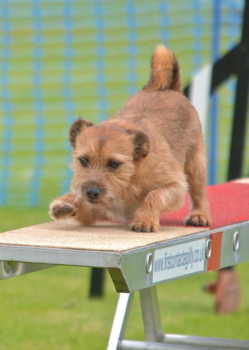 Stirling-dog-agility