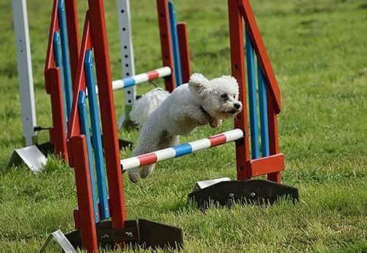 stirling-agility-group-classes