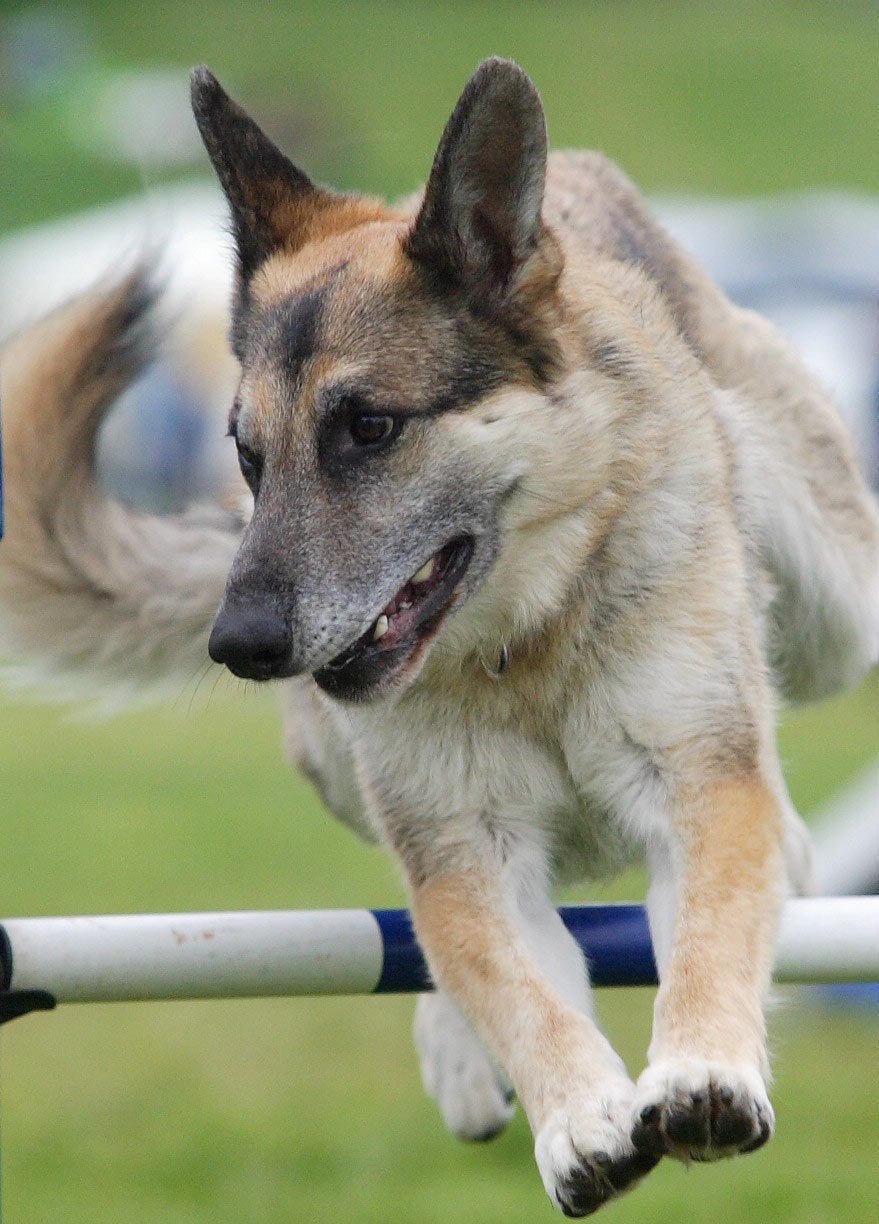 stirling-agility-weekly-classes