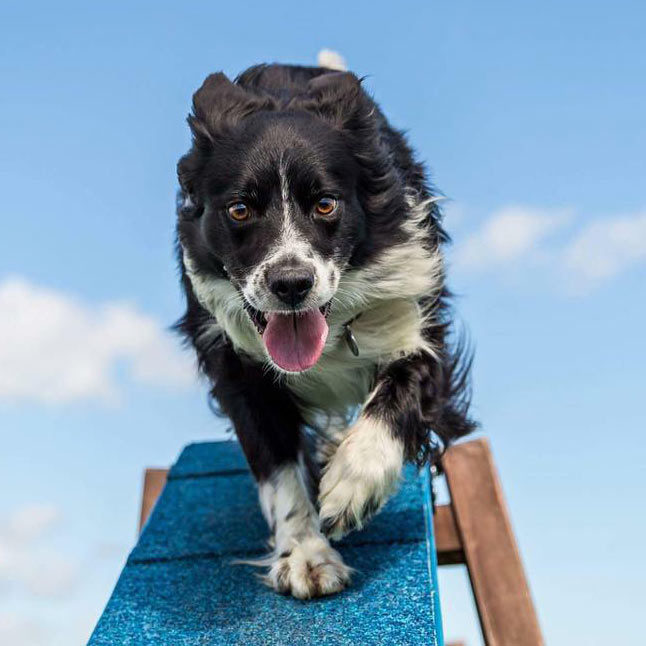 Stirling-dog-agility-A