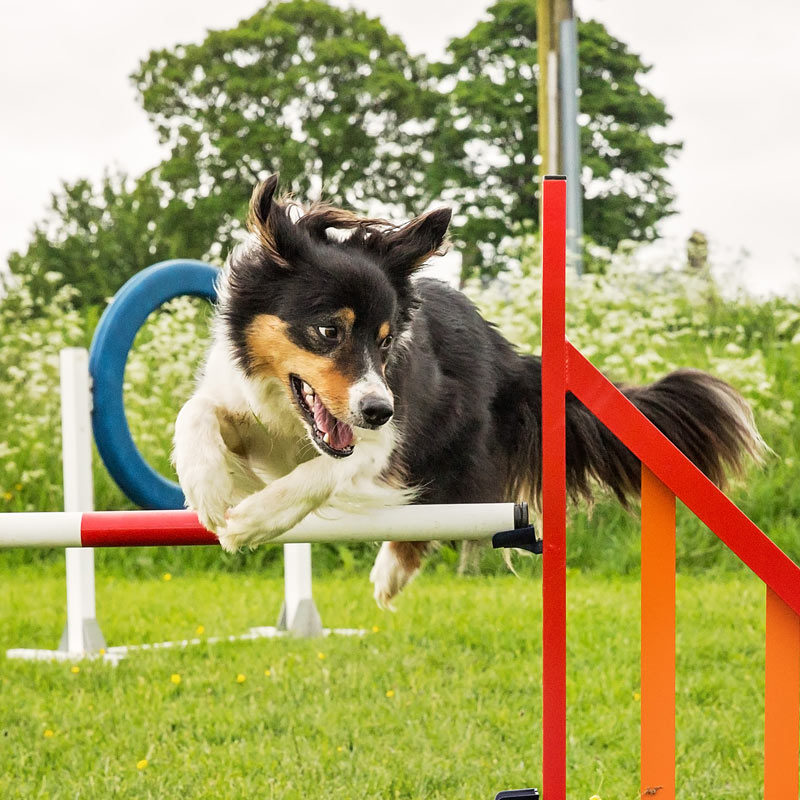Stirling-dog-agility-C